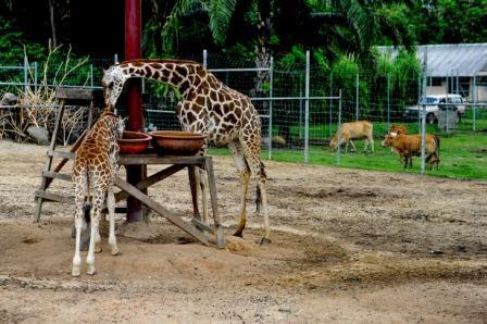 MAZPA Rayu Bantuan Untuk Hidupan Liar  Zoologi Swasta